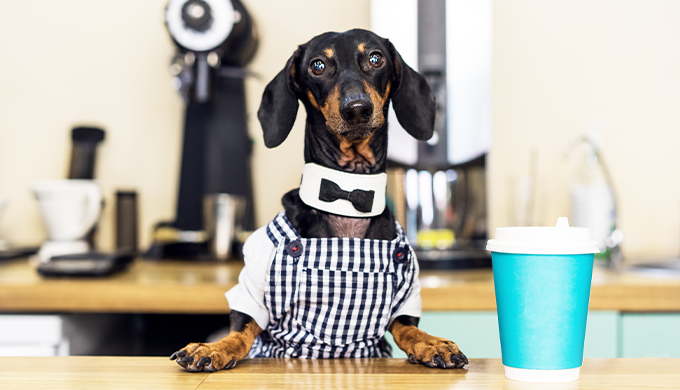 【都内のオススメ店紹介】犬カフェとドッグカフェの違いとは?