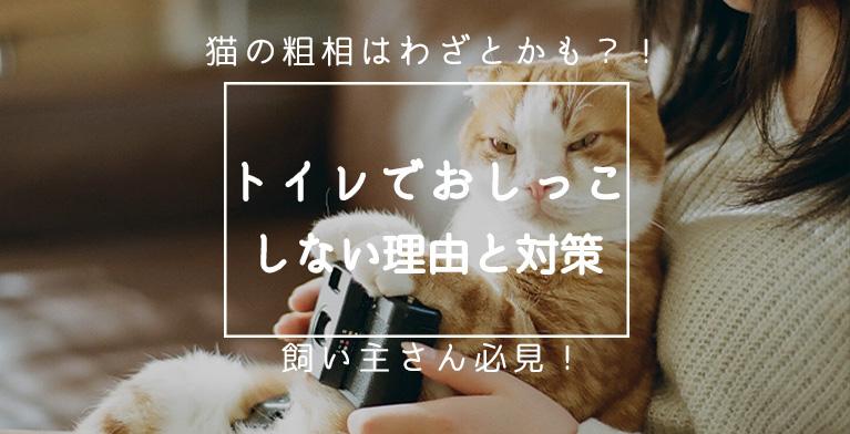 【猫の粗相はわざとかも】トイレでおしっこをしない理由と対策