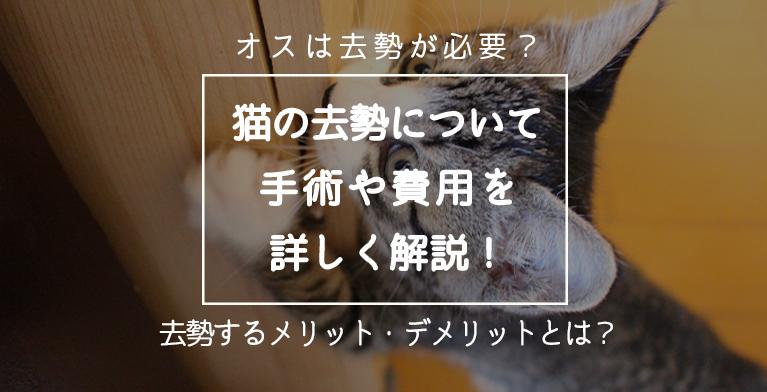 【オス猫は去勢が必要?】猫の去勢手術や費用を詳しく解説!