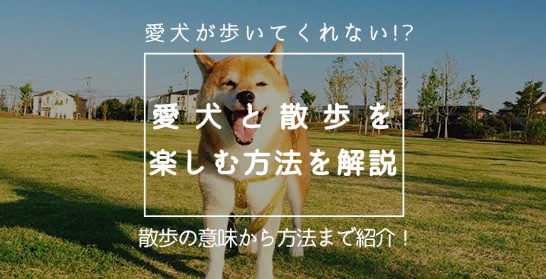 【犬が散歩で歩かない!】愛犬と散歩を安全に楽しむための方法大解説