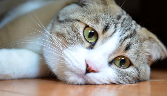 【これは寄生虫かも?】猫に寄生する虫と対処法とは