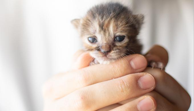【生まれたて子猫のエサの与え方】ミルク~ドライフード