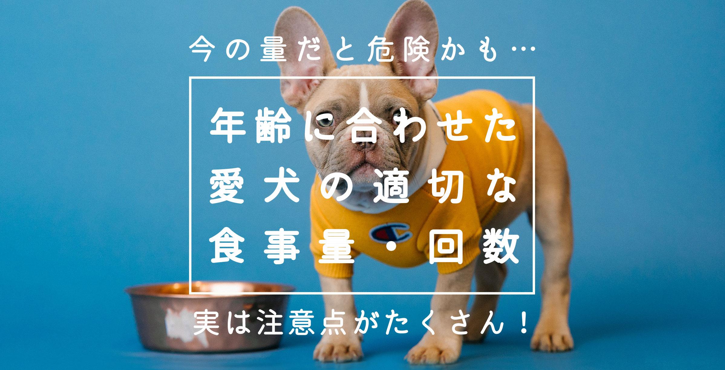08_dogfood_times