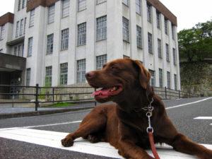 歴史的建造物と犬