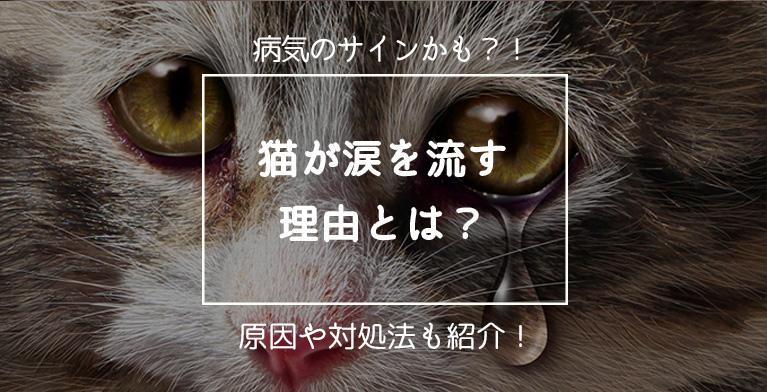 【猫が涙を流す理由】病気のサインかも?原因や対処法を紹介