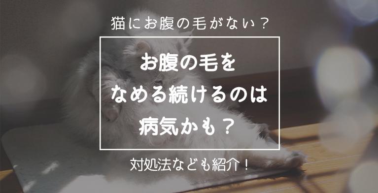 【猫のお腹の毛がない⁉】抜けるまで舐め続ける猫は病気?