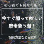 【初心者でも飼育可能】今すぐ飼ってほしい熱帯魚5選!
