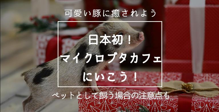 【予約必須!日本初マイクロブタカフェ】可愛いブタに癒されに行こう!