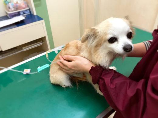 病院にいる犬