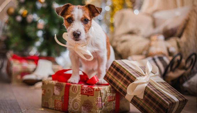 犬とプレゼント