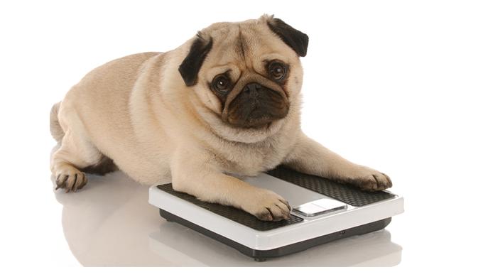 犬と体重計
