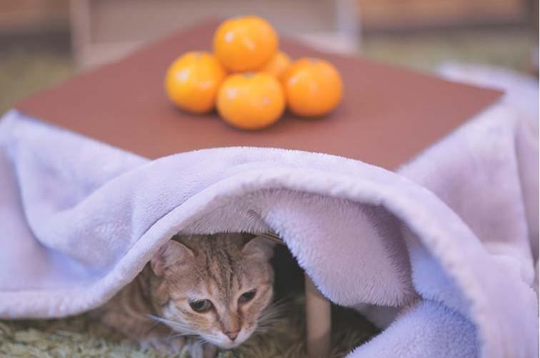 【猫用こたつは安全?】おすすめの猫用こたつを口コミをもとに紹介