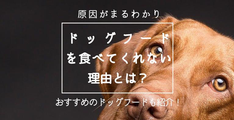 【愛犬がご飯を食べない理由とは?】食べない時のおすすめ対処法も紹介