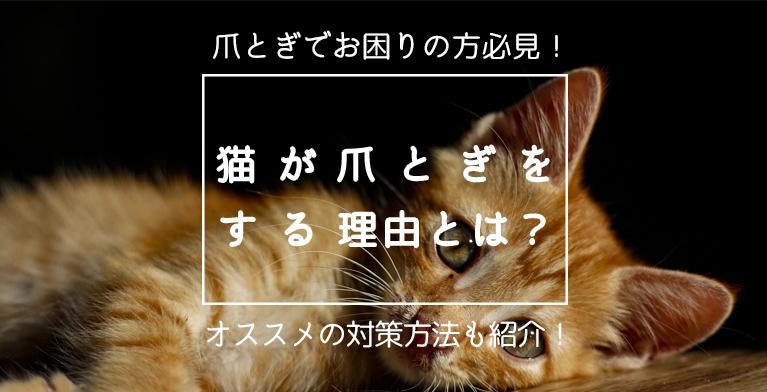 【猫が爪とぎする理由とは?】おすすめの爪とぎ対策やグッズを紹介