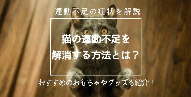 【猫の運動不足を解消する方法とは?】運動不足の症状や解消法を解説
